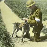 soldier-messenger-dog_web.jpg