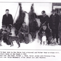 Wild boar shot by Roy Morse (not pictured) and Palmer Read on Black Hill. Picture taken at Abe Reads c. 1955.